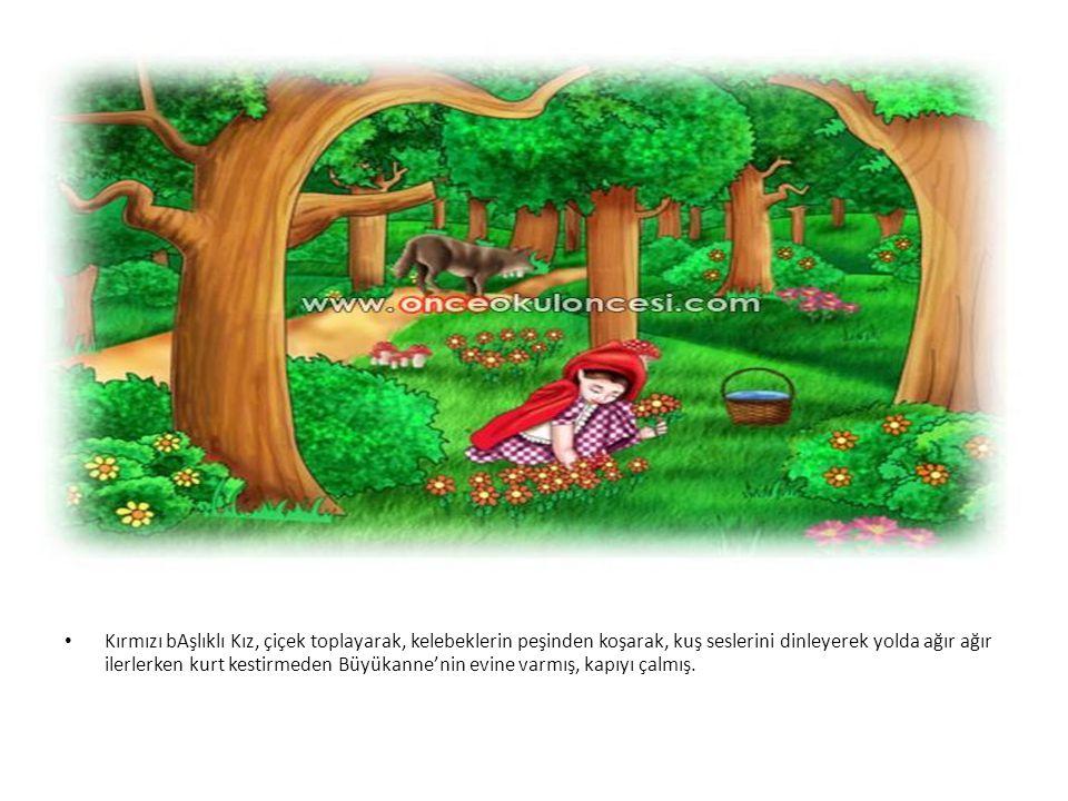 • Kırmızı bAşlıklı Kız, çiçek toplayarak, kelebeklerin peşinden koşarak, kuş seslerini dinleyerek yolda ağır ağır ilerlerken kurt kestirmeden Büyükann