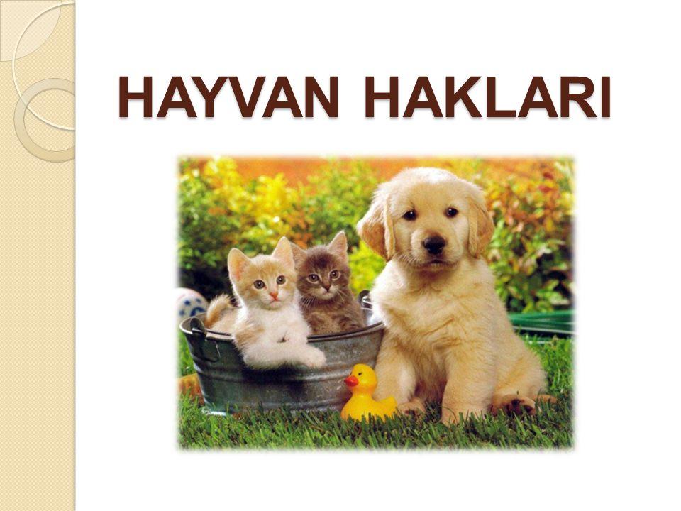 HAYVAN HAKLARI