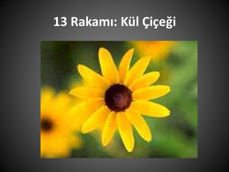 13 Rakamı: Kül Çiçeği