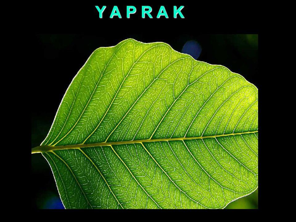 Y A P R A K