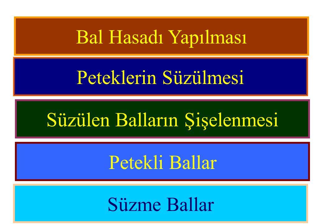 Bal Hasadı Yapılması Peteklerin Süzülmesi Süzülen Balların Şişelenmesi Petekli Ballar Süzme Ballar