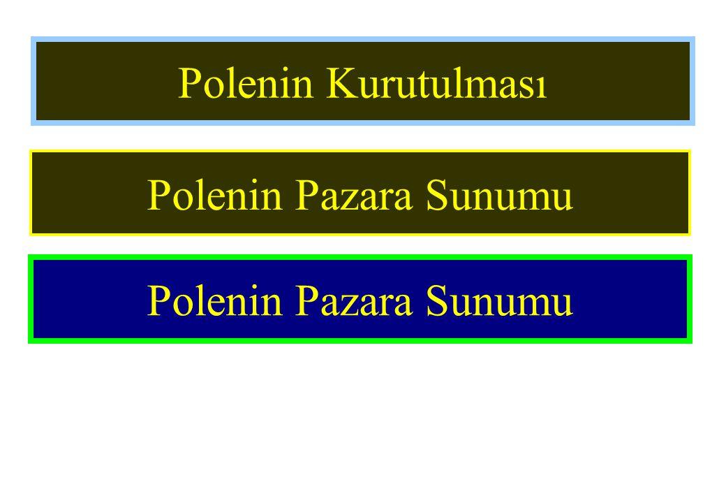 Polenin Kurutulması Polenin Pazara Sunumu