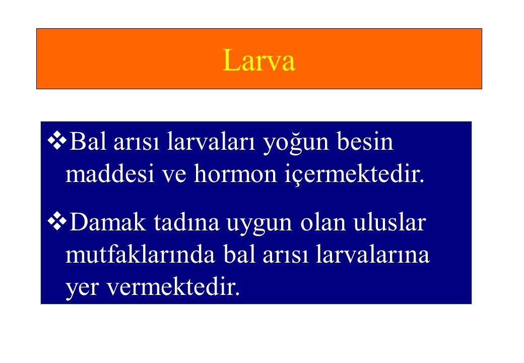 Larva  Bal arısı larvaları yoğun besin maddesi ve hormon içermektedir.  Damak tadına uygun olan uluslar mutfaklarında bal arısı larvalarına yer verm