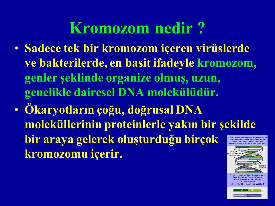 Kromozomlar ne zaman ve nasıl göriilebilir.