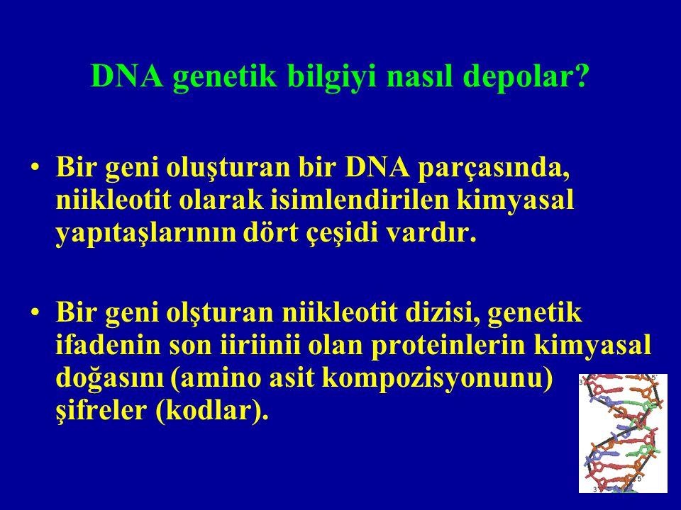 Bir genin son iirününün protein olmadığı istisnalar var mıdır.