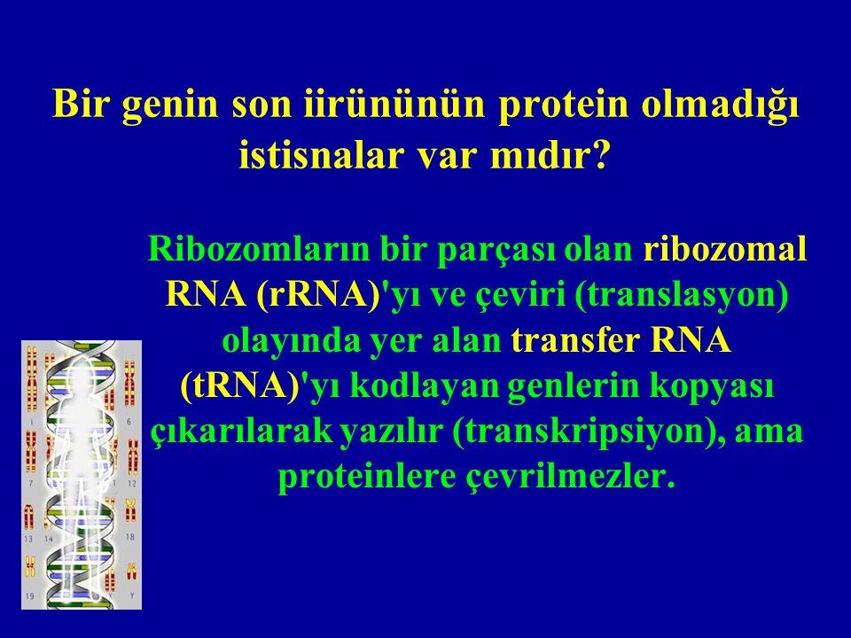 DNA genetik bilgiyi nasıl depolar.
