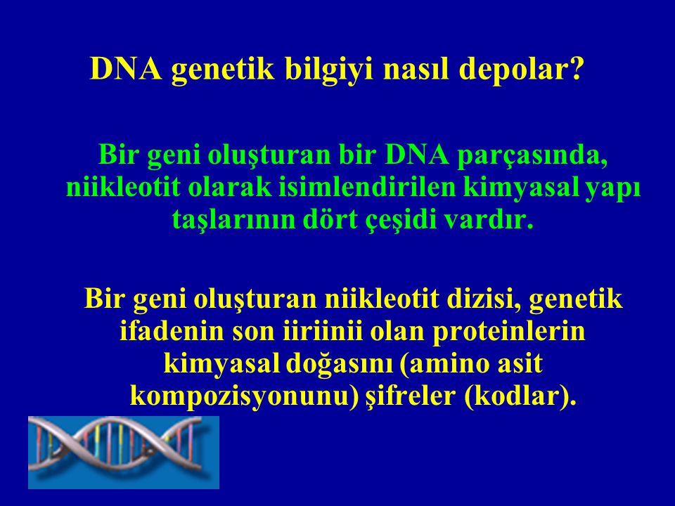 Genetik şifre nasıl organize olmuştur.•DNA da dört tip niikleotit vardır.