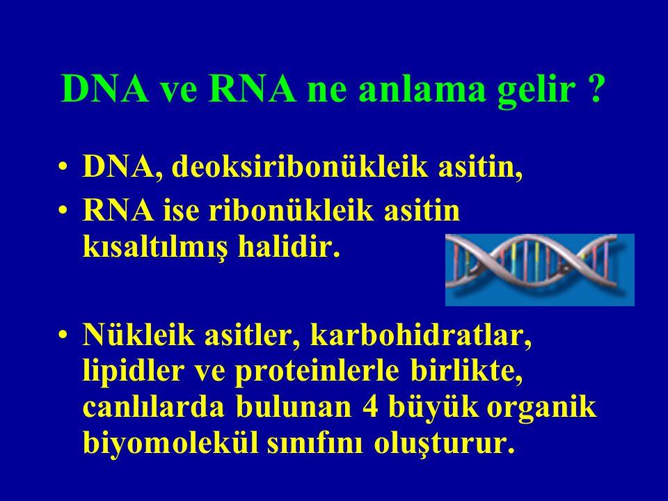 DNA genetik materyal olarak iş görmek üzere nasıl organize olmuştur .