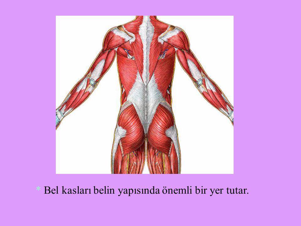 * Bel kasları belin yapısında önemli bir yer tutar.