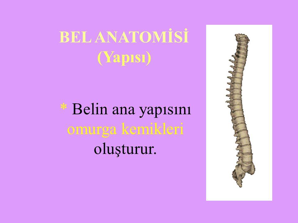 * Belin ana yapısını omurga kemikleri oluşturur. BEL ANATOMİSİ (Yapısı)