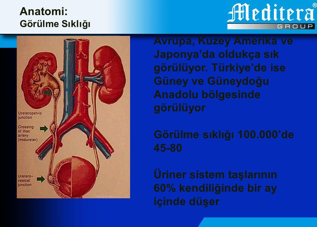 Anatomi: Görülme Sıklığı Avrupa, Kuzey Amerika ve Japonya'da oldukça sık görülüyor. Türkiye'de ise Güney ve Güneydoğu Anadolu bölgesinde görülüyor Gör