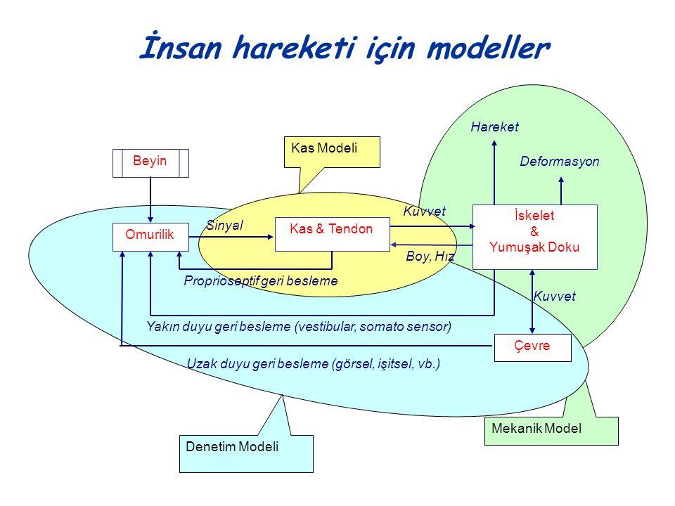 İnsan hareketi için modeller Mekanik Model Denetim Modeli Kas Modeli Beyin Omurilik Sinyal Kas & Tendon Kuvvet İskelet & Yumuşak Doku Hareket Kuvvet Ç
