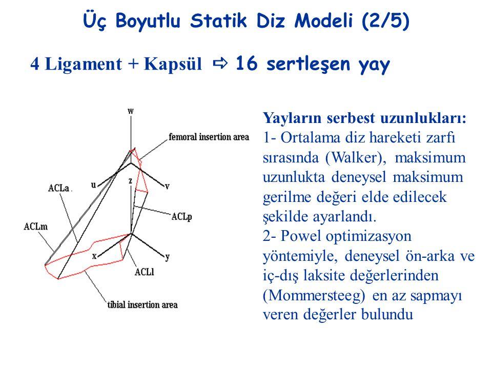 Üç Boyutlu Statik Diz Modeli (2/5) 4 Ligament + Kapsül  16 sertleşen yay Yayların serbest uzunlukları: 1- Ortalama diz hareketi zarfı sırasında (Walk