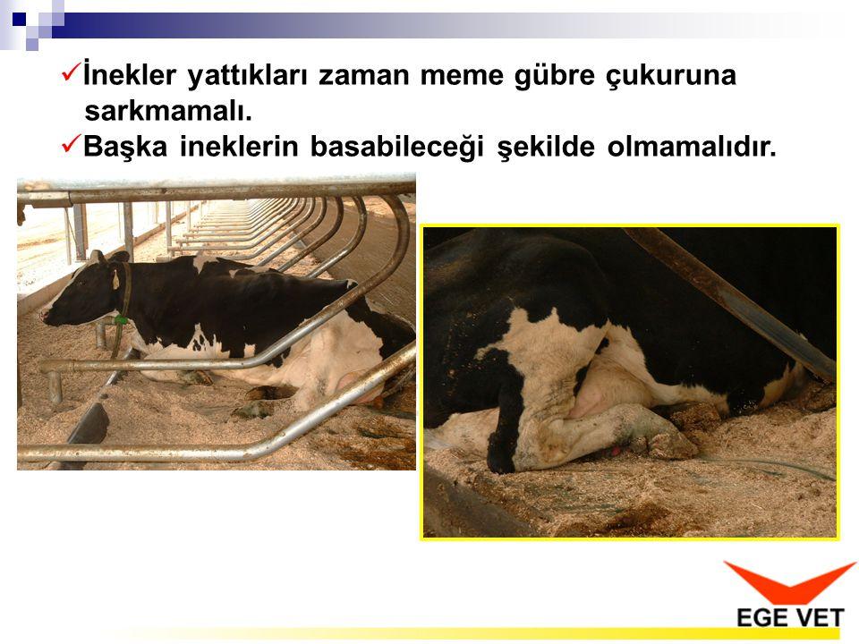  İnekler yattıkları zaman meme gübre çukuruna sarkmamalı.  Başka ineklerin basabileceği şekilde olmamalıdır.