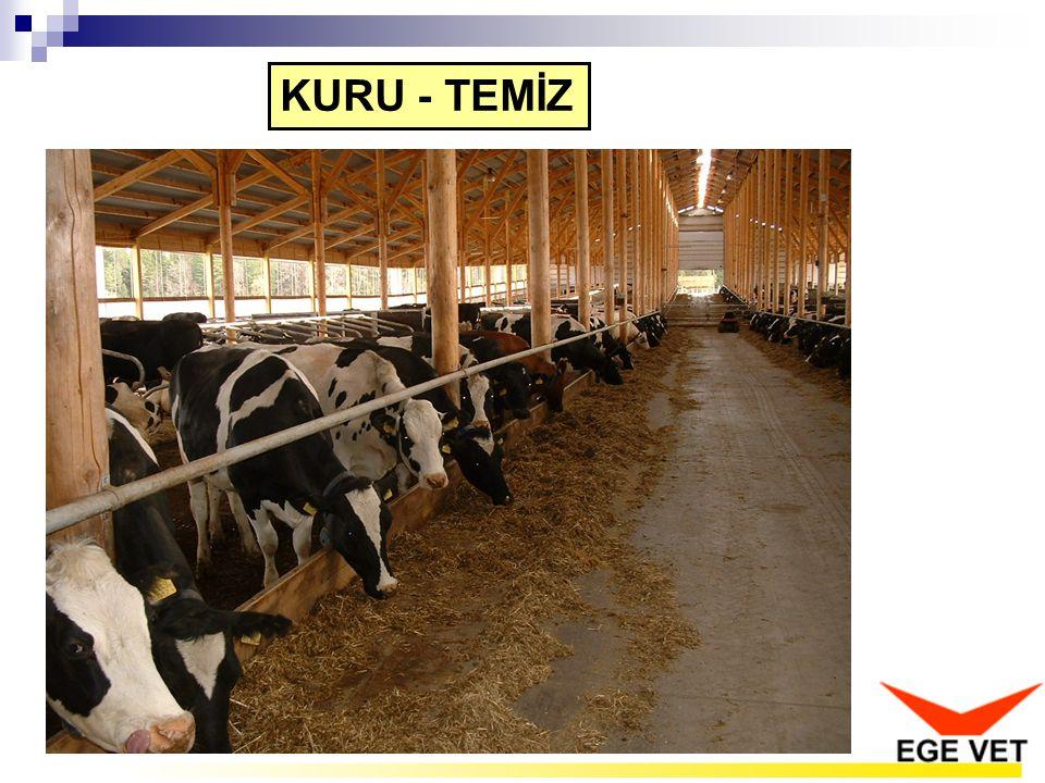 KURU - TEMİZ