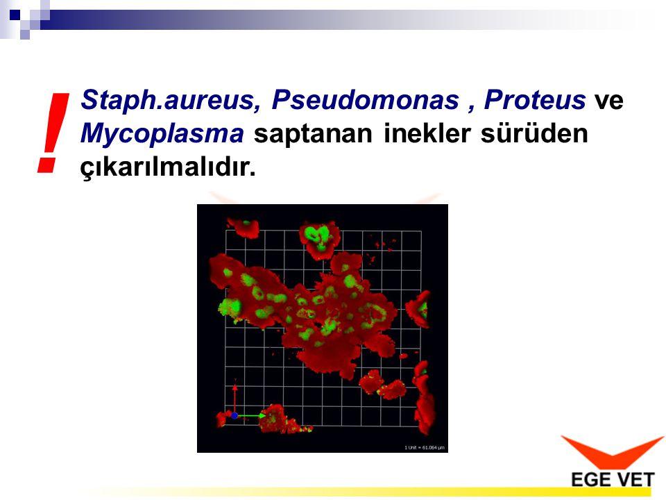 Staph.aureus, Pseudomonas, Proteus ve Mycoplasma saptanan inekler sürüden çıkarılmalıdır. !