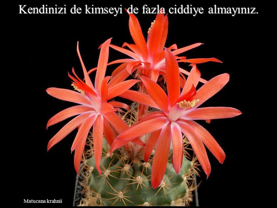 Neowerdermannia vorwerkii Yaşam, nefretle harcanacak kadar uzun değildir.