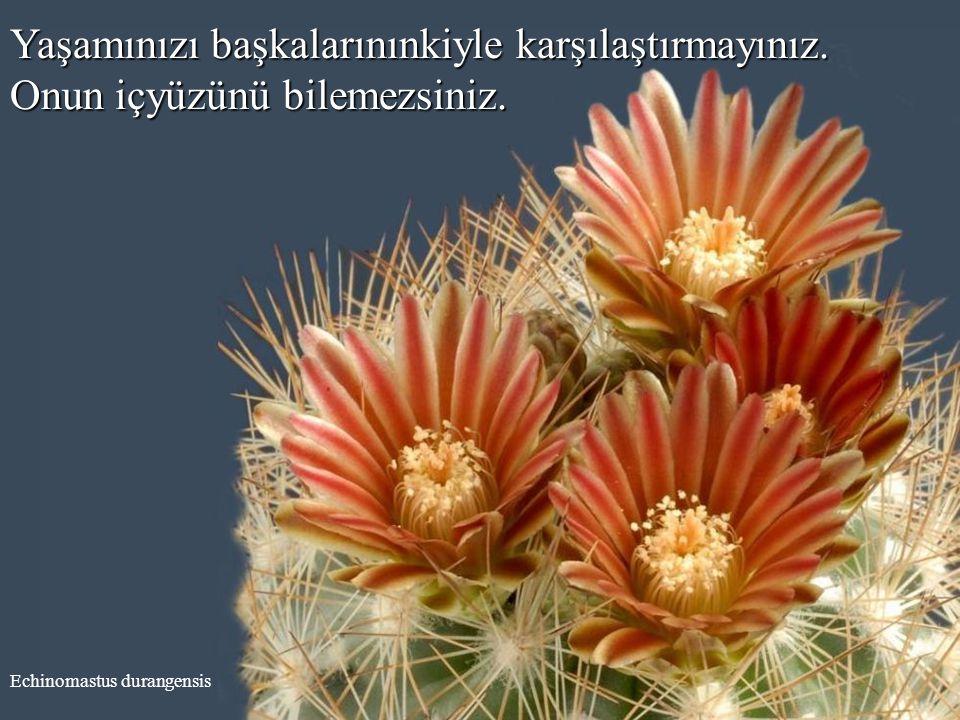 Echinocereus subinermis Daima haklı olmaya çalışmayınız. Bazen haklı olunur veya olunmaz.
