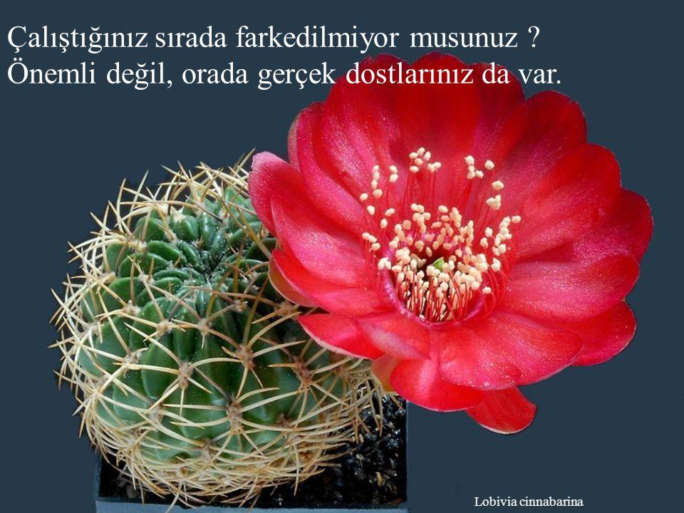 Ferobergia hybride Bulunduğunuz anı dolu dolu yaşamak için, geçmişinizle barış yapınız.