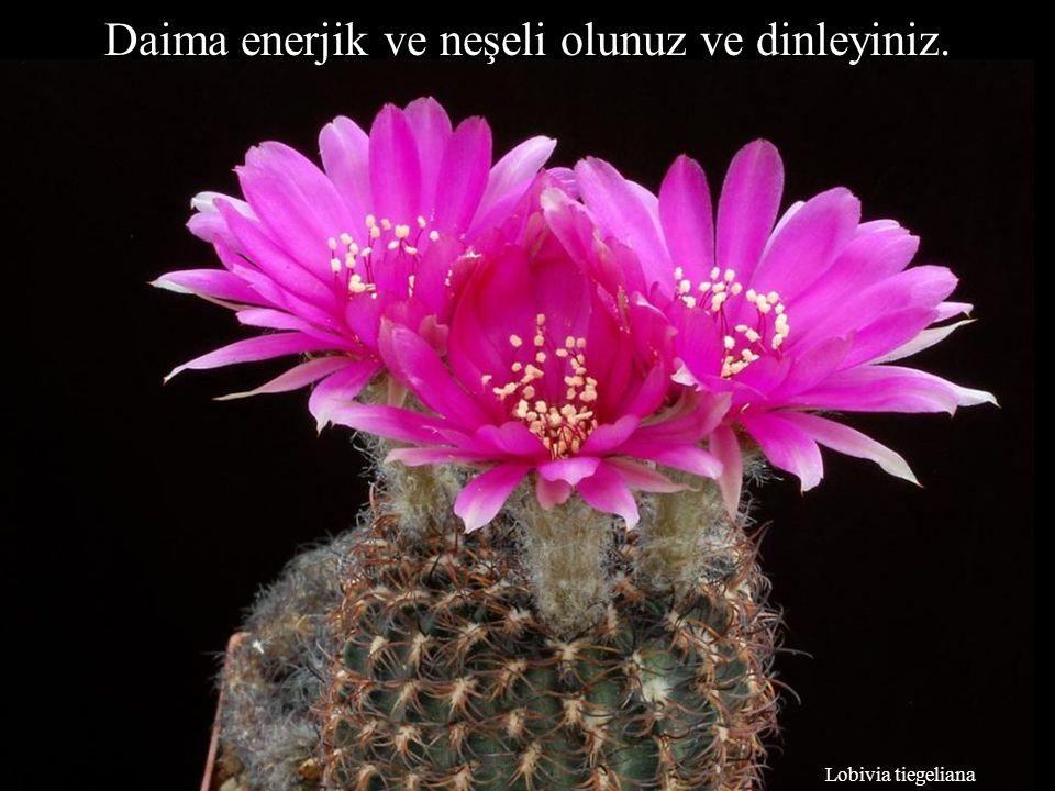 Lobivia tiegeliana Daima enerjik ve neşeli olunuz ve dinleyiniz.