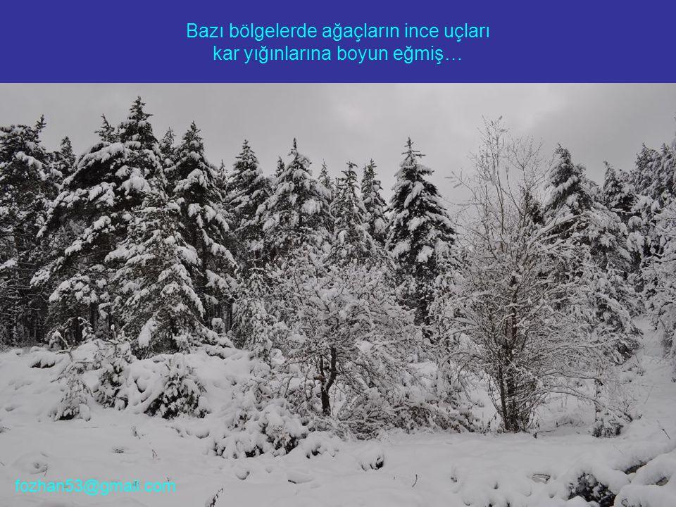 Bazı bölgelerde ağaçların ince uçları kar yığınlarına boyun eğmiş… fozhan53@gmail.com