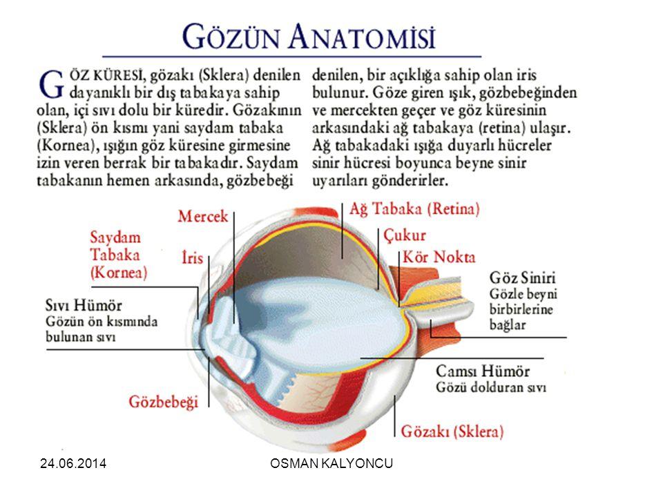 24.06.2014 SERT TABAKA  Göz yuvarlağını en dıştan saran beyaz renkli koruyucu tabakadır.