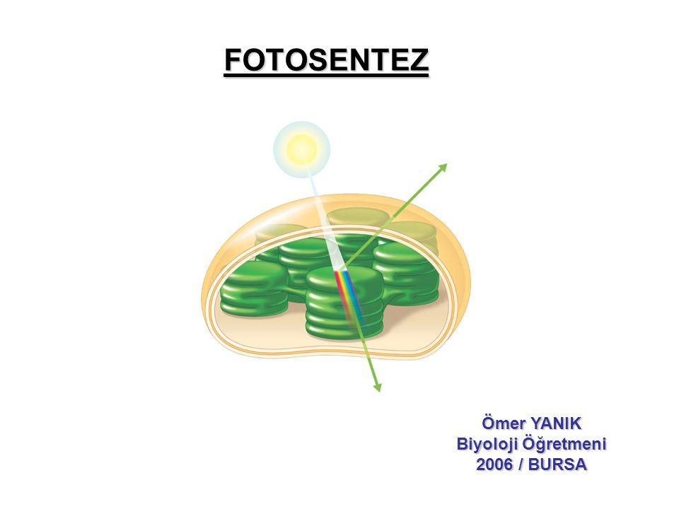 •Fotosentez ile her yıl 160 milyar ton karbonhidrat üretilir.
