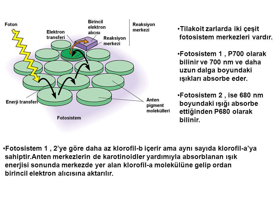 •Tilakoit zarlarda iki çeşit fotosistem merkezleri vardır. •Fotosistem 1, P700 olarak bilinir ve 700 nm ve daha uzun dalga boyundaki ışıkları absorbe