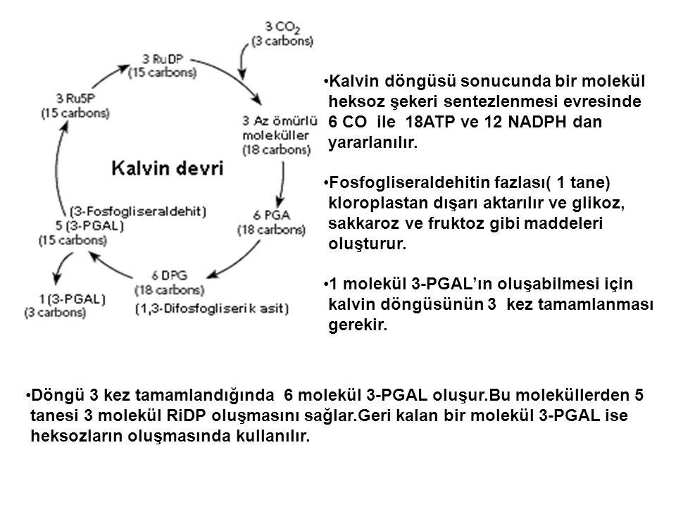 •Kalvin döngüsü sonucunda bir molekül heksoz şekeri sentezlenmesi evresinde 6 CO ile 18ATP ve 12 NADPH dan yararlanılır. •Fosfogliseraldehitin fazlası
