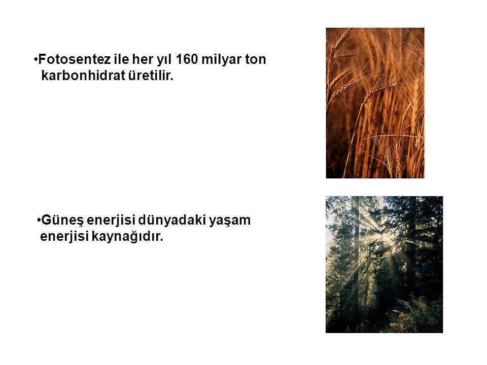 •Fotosentez ile her yıl 160 milyar ton karbonhidrat üretilir. •Güneş enerjisi dünyadaki yaşam enerjisi kaynağıdır.