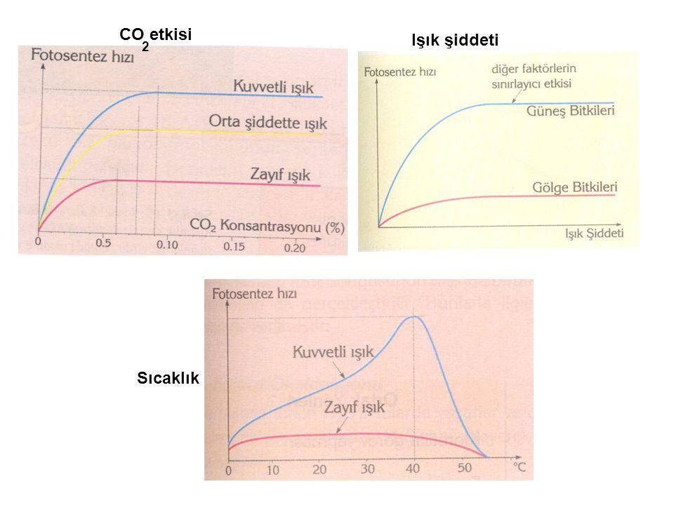 CO etkisi 2 Işık şiddeti Sıcaklık