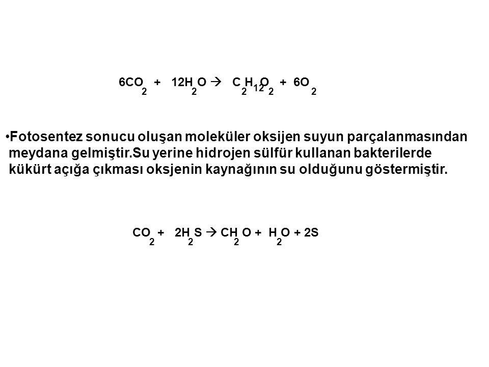 CO + 2H S  CH O + H O + 2S 6CO + 12H O  C H O + 6O •Fotosentez sonucu oluşan moleküler oksijen suyun parçalanmasından meydana gelmiştir.Su yerine hi