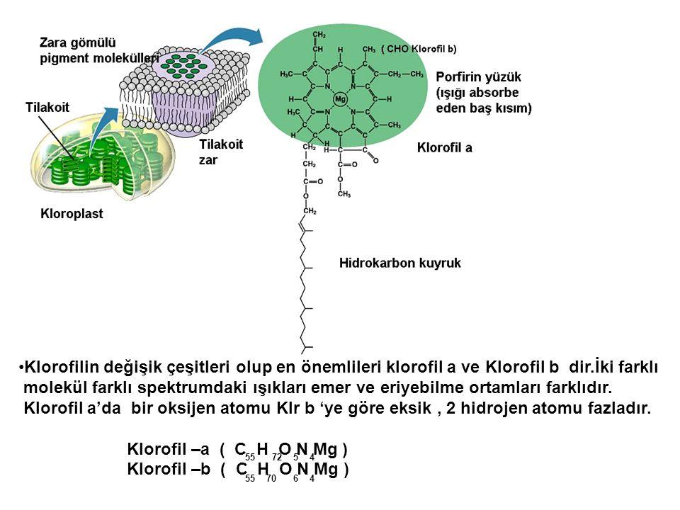 •Klorofilin değişik çeşitleri olup en önemlileri klorofil a ve Klorofil b dir.İki farklı molekül farklı spektrumdaki ışıkları emer ve eriyebilme ortam