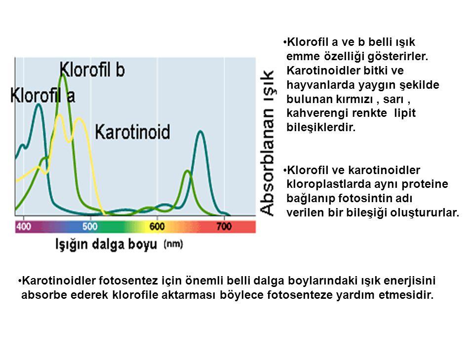 •Klorofil a ve b belli ışık emme özelliği gösterirler. Karotinoidler bitki ve hayvanlarda yaygın şekilde bulunan kırmızı, sarı, kahverengi renkte lipi