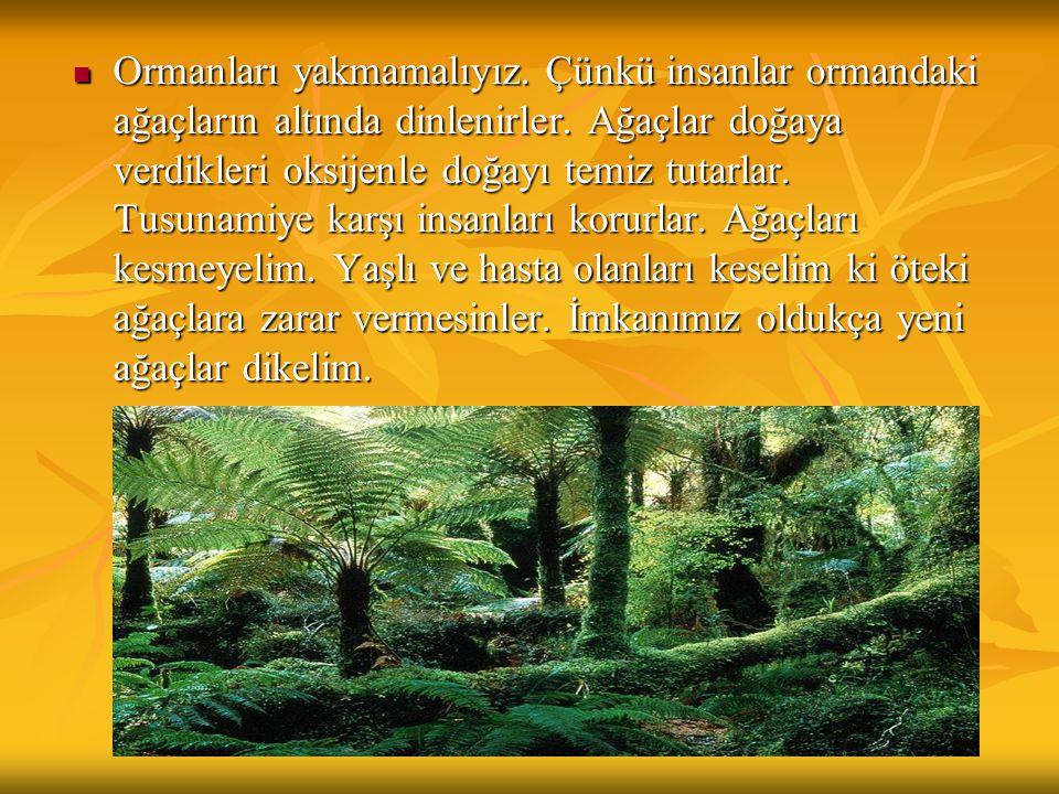  Ormanları yakmamalıyız. Çünkü insanlar ormandaki ağaçların altında dinlenirler. Ağaçlar doğaya verdikleri oksijenle doğayı temiz tutarlar. Tusunamiy