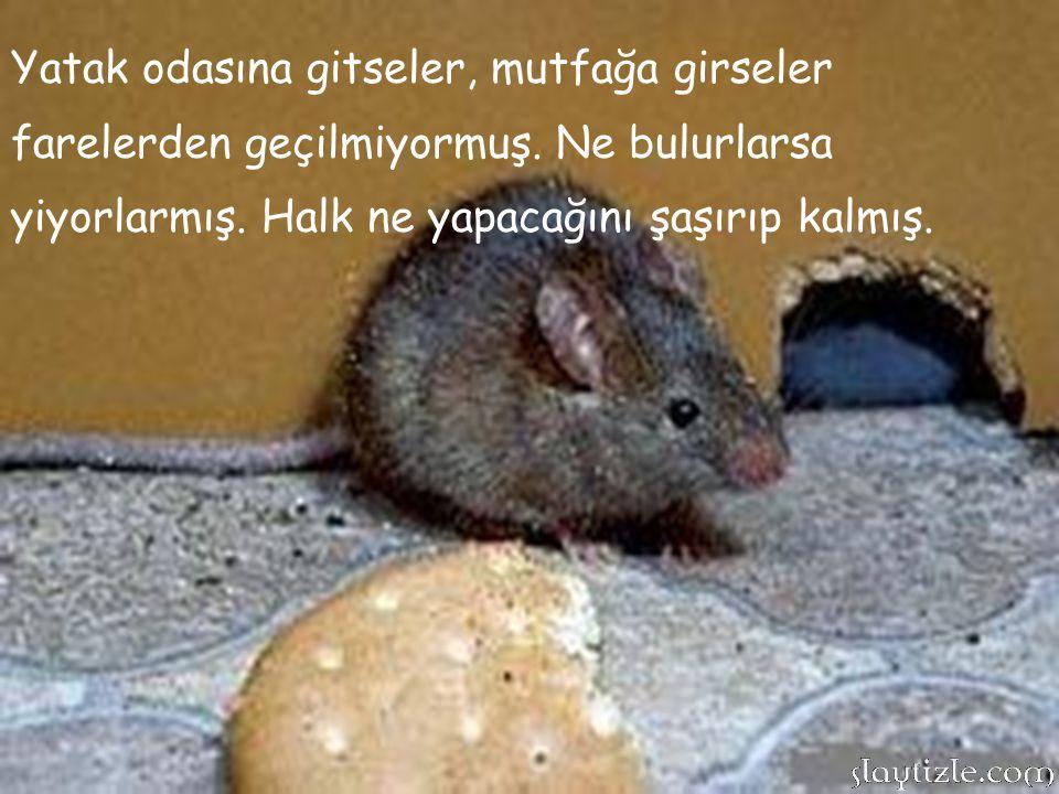 Halkı mutluluk içinde yaşarmış. Günlerden bir gün köyün bütün evlerine fareler dolmuş. Binlerce fare köyün sokaklarında, evlerde dolaşıyorlarmış.