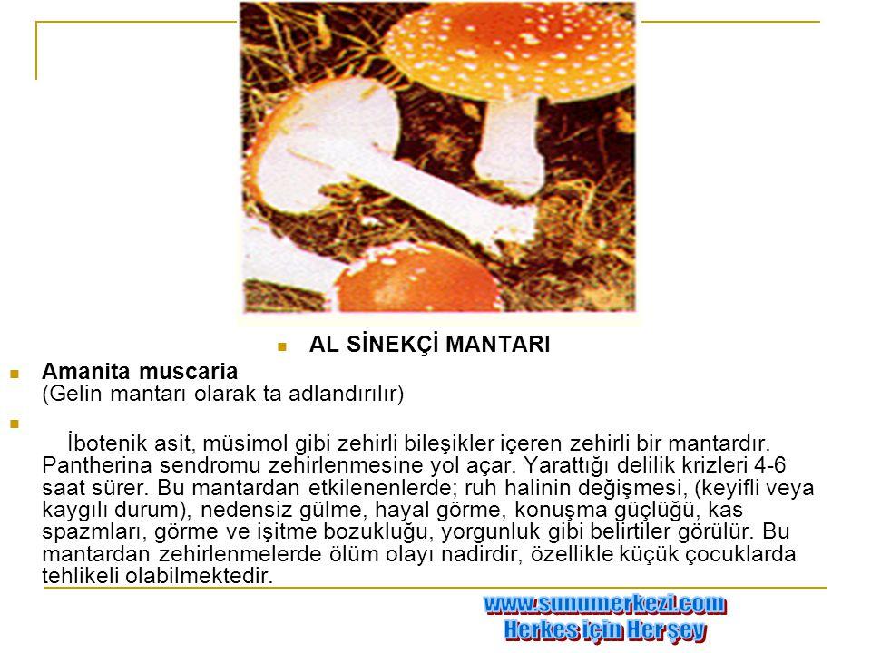  AL SİNEKÇİ MANTARI  Amanita muscaria (Gelin mantarı olarak ta adlandırılır)  İbotenik asit, müsimol gibi zehirli bileşikler içeren zehirli bir man