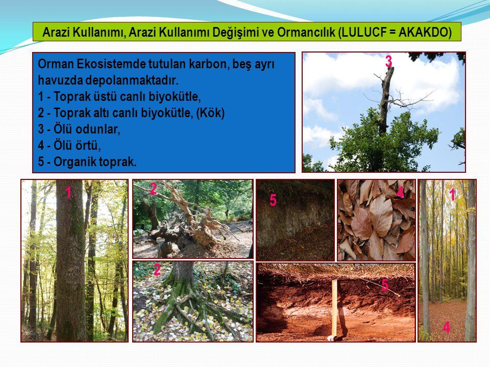 Arazi Kullanımı, Arazi Kullanımı Değişimi ve Ormancılık (LULUCF = AKAKDO) Orman Ekosistemde tutulan karbon, beş ayrı havuzda depolanmaktadır.
