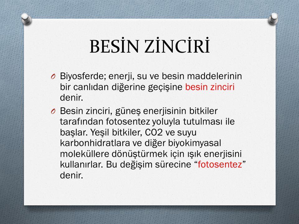 BESİN ZİNCİRİ ÜRETİCİLER  I.TÜKETİCİLER  II.