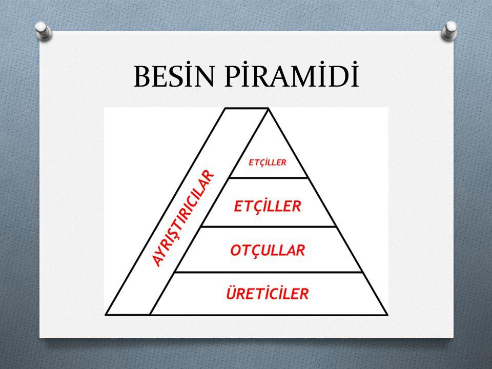 O Bir canlının besin düzeyi onun enerji akış piramidindeki yerini belirler.