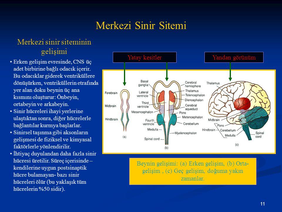 11 Merkezi Sinir Sitemi Merkezi sinir siteminin gelişimi •Erken gelişim evresinde, CNS üç adet birbirine bağlı odacık içerir. Bu odacıklar giderek ven