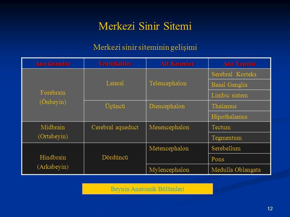 12 Merkezi Sinir Sitemi Merkezi sinir siteminin gelişimi Beynin Anatomik Bölümleri Ana kısımlar Ventriküller Alt Kısımlar Ana Yapılar Forebrain (Önbey
