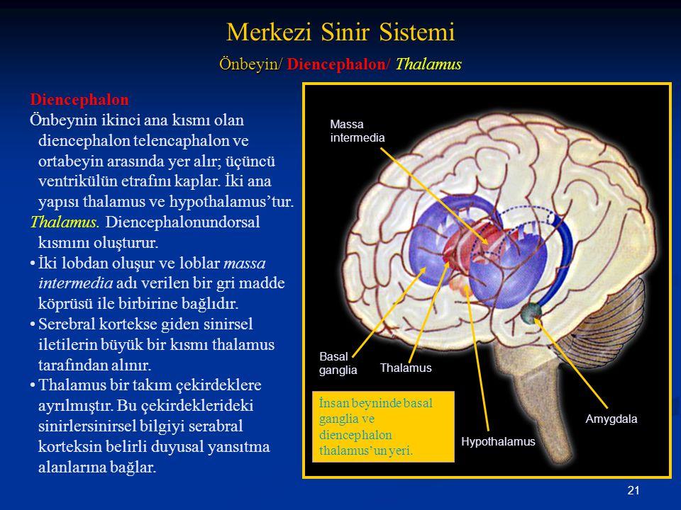 21 Merkezi Sinir Sistemi Önbeyin/ Önbeyin/ Diencephalon/ Thalamus Diencephalon Önbeynin ikinci ana kısmı olan diencephalon telencaphalon ve ortabeyin