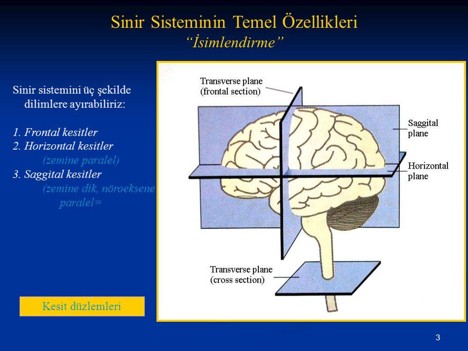 4 Sinir Sisteminin Temel Özellikleri Sinir Sistemi Merkezi Sinir Sistemi (CNS) Omurilik Beyin Çevresel Sinir Sistemi (PNS) Cranial sinirler Omurilik sinirleri Çevresel ganglia