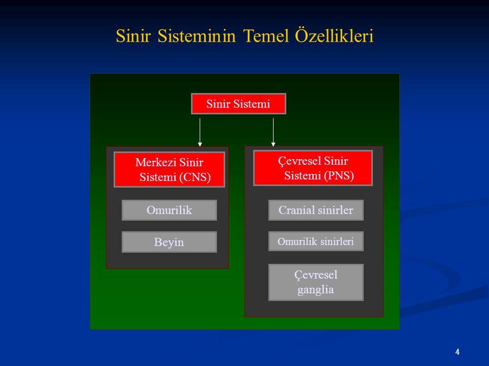 4 Sinir Sisteminin Temel Özellikleri Sinir Sistemi Merkezi Sinir Sistemi (CNS) Omurilik Beyin Çevresel Sinir Sistemi (PNS) Cranial sinirler Omurilik s