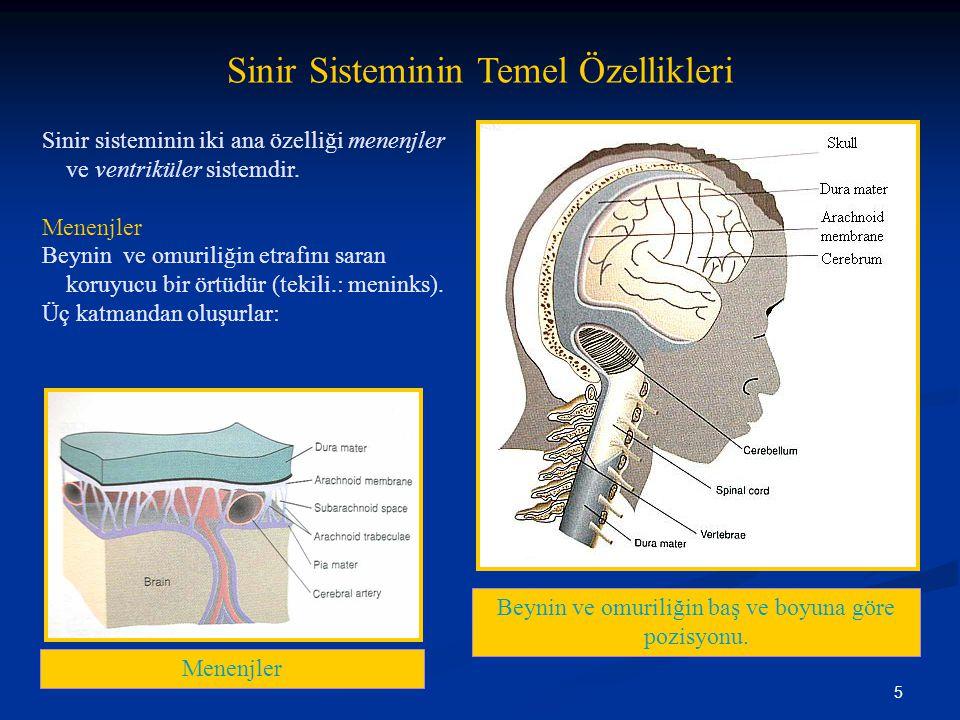 5 Sinir Sisteminin Temel Özellikleri Sinir sisteminin iki ana özelliği menenjler ve ventriküler sistemdir. Menenjler Beynin ve omuriliğin etrafını sar