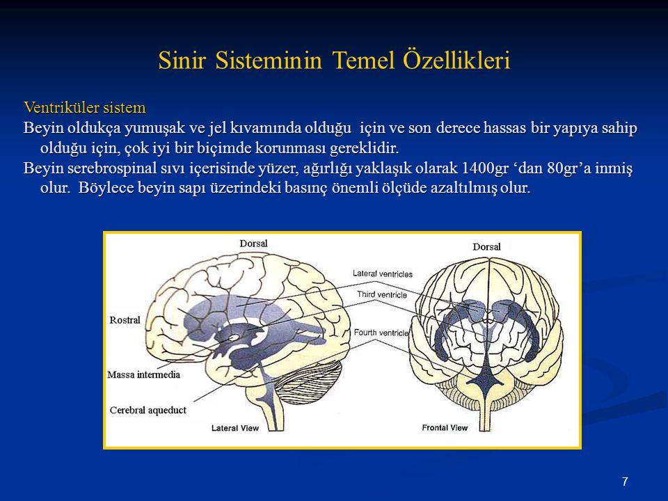 7 Sinir Sisteminin Temel Özellikleri Ventriküler sistem Beyin oldukça yumuşak ve jel kıvamında olduğu için ve son derece hassas bir yapıya sahip olduğ
