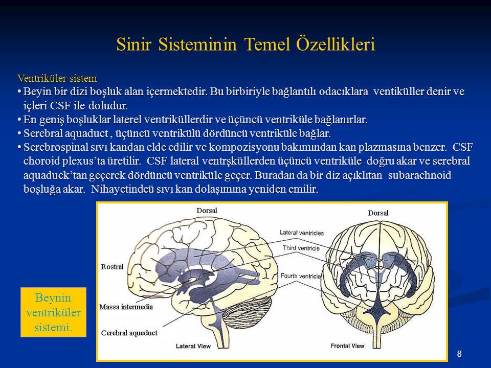 8 Sinir Sisteminin Temel Özellikleri Ventriküler sistem •Beyin bir dizi boşluk alan içermektedir. Bu birbiriyle bağlantılı odacıklara ventiküller deni
