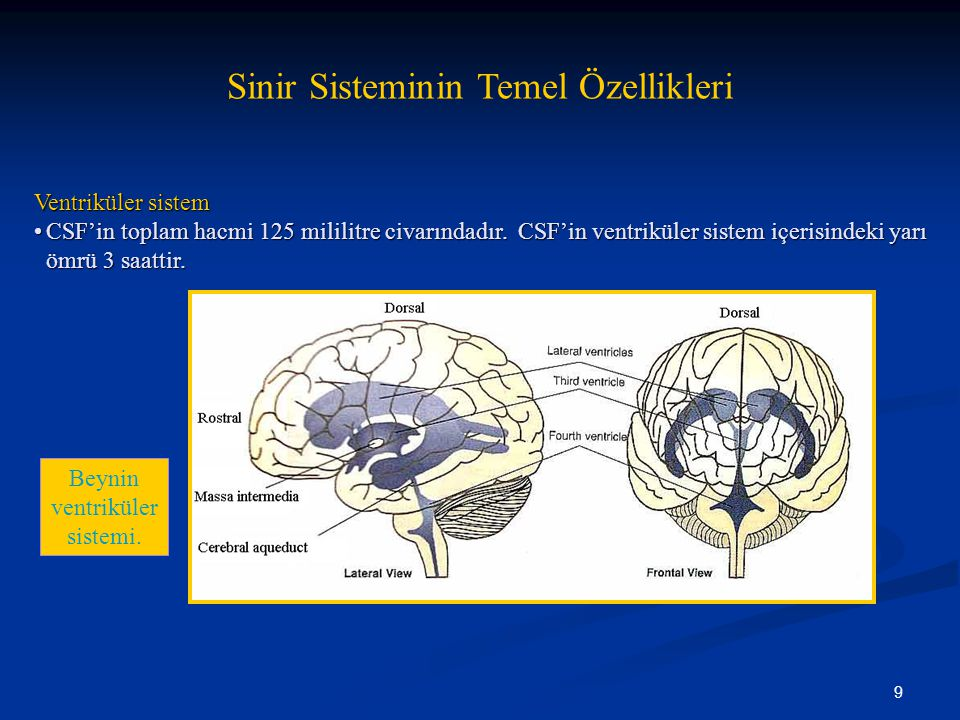 9 Sinir Sisteminin Temel Özellikleri Ventriküler sistem •CSF'in toplam hacmi 125 mililitre civarındadır. CSF'in ventriküler sistem içerisindeki yarı ö