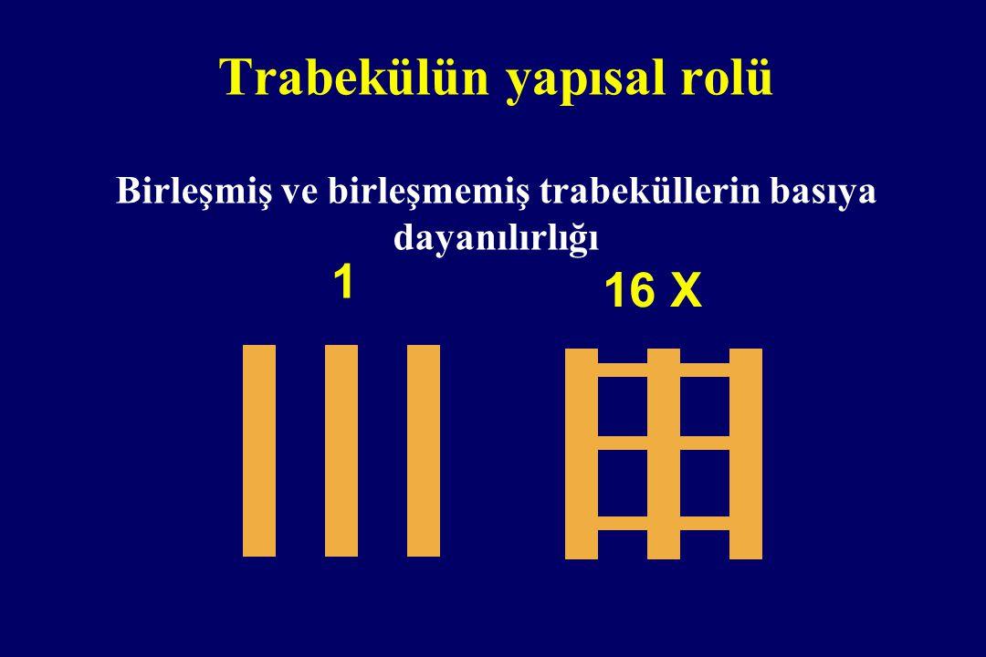 Trabekülün yapısal rolü Birleşmiş ve birleşmemiş trabeküllerin basıya dayanılırlığı 16 X 1